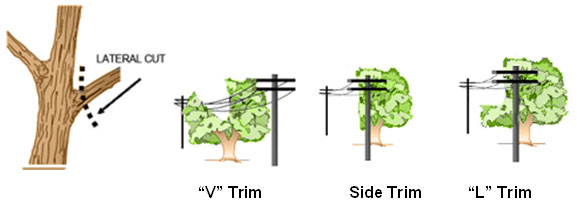 Directional or Lateral Pruning